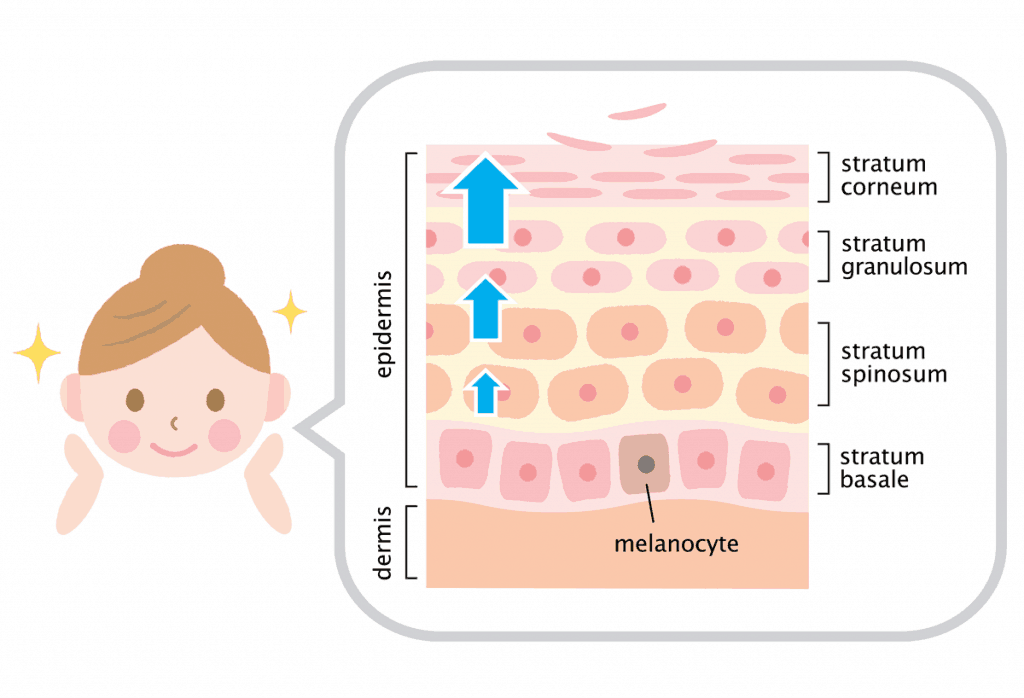Turnover cell skins